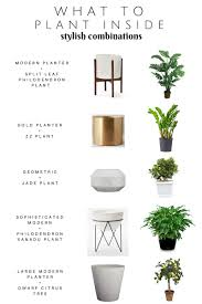 modern oh so stylish planters planters plants and stylish