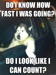 Dog In Car Meme - do i know how fast i was going do i look like i can count mean