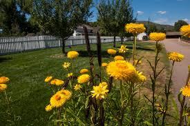 agriculture past u0026 present denver botanic gardens
