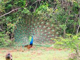 eastern and western ghats western ghats birding u0026 safaris