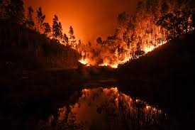 Definition For Wildfire by 62 Killed As Wildfire Rages Through Portugal Dozens More Injured