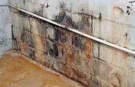 opulent design how to get rid of black mold in basement in the