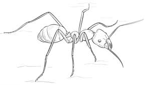 meat eater ant coloring page free printable coloring pages