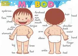 parts of the body worksheets handouts resources flashcards