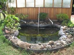 backyard aquaponics australia
