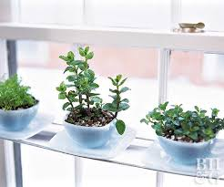 Window Sill Garden Inspiration Windowsill Gardens