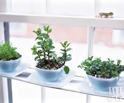 windowsill gardens