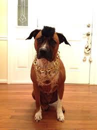 Funny Dog Costumes Halloween 87 Dog Halloween Costumes Images Animals