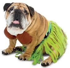 Dog Costume Halloween 21 Rasta Imposta Dog Costumes Images