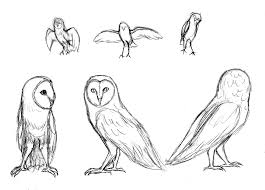 owl sketches by soulphur on deviantart