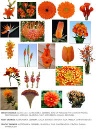 color series orange flowers for weddings dahlia floral design
