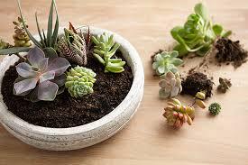diy terrarium create a mini landscape in 6 steps