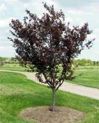 tree species found in bowling green tree advisory board