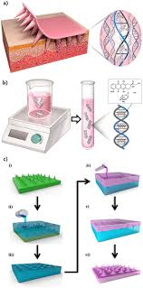 drug delivery system based on salmon dna nano and micro scale