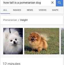Pomeranian Meme - found this meme hidden away could this resignal the rise of how