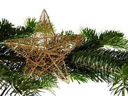free images branch star evergreen fir christmas tree twig