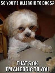 Dog Jokes Meme - 12 dog memes that will make your day viral slacker