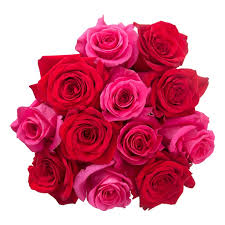 roses valentines day s day roses in the air 1 877 417 9657
