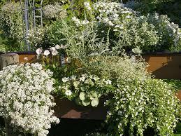winterharte pflanzen balkon pflanzen für den balkon in weiß