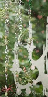 Air Plant Wall Holder Best 25 Hanging Air Plants Ideas Only On Pinterest Hanging Air