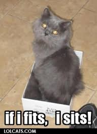 Lol Cat Meme - memes and such