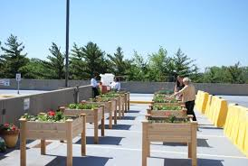 ingalls hospital rooftop garden to benefit 3 food pantries south