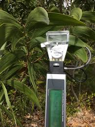 hawaii native plants guest post using plant science tools to monitor and restore a