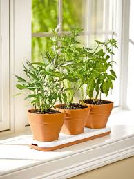 home decor wonderful herb garden ideas herb gardening