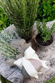 Herbs Indoors by Potting Rosemary Indoors U2014 Chyka Com