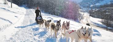dog sledding in courchevel fenestraz
