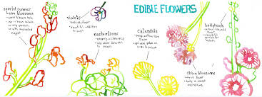 Edible Flowers Edible Flowers By Naomi Bardoff They Draw U0026 Cook