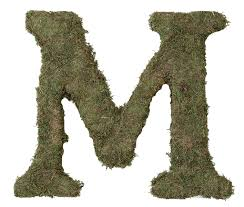 Letter Home Decor by Amazon Com Lillian Rose Moss Letter For Home Decor 15 Inch
