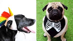 Pet Halloween Costumes You Can Get A Perfect Dog Halloween Costume On Etsy Even For Dogs