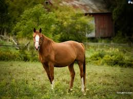 Are Horses Color Blind How Much Do You Really Know About Horses Playbuzz