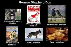 Funny German Shepherd Memes - ideal funny german memes funny german shepherd memes memes kayak