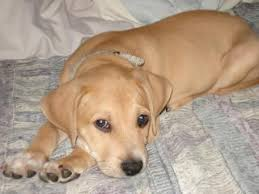 Dog Peed On Bed How To Stop A Dog Wetting The Bed Stop That Dog