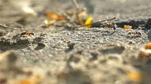 Ants In Backyard Carolina Chickadee Bird Feeding In Warm Evening Light In The