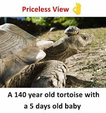 Tortoise Meme - dopl3r com memes priceless view a 140 year old tortoise with a 5