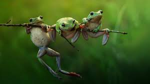 free hd wallpapers frogs on branch hdwallpaperfreebie