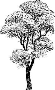 black n white fall trees polyvore