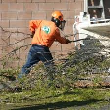 all about trees 13 reviews tree services chatsworth west
