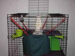 Large Ferret Cage Ferret Cage The Ferret Zone