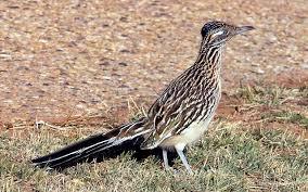 list of u s state birds wikiwand