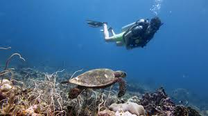 padi open water referral local dive thailand