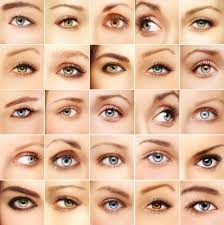 anatomy of the eye archives discovery eye foundation