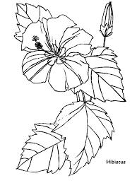 coloring pictures of hibiscus flowers hibiscus flower for flower arrangement coloring page color luna