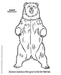 wild animal coloring pages kodiak bear standing coloring