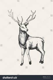 sketch illustration reindeer stock vector 230851540 shutterstock