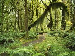 Washington Forest images The most beautiful forests to visit in washington state jpg