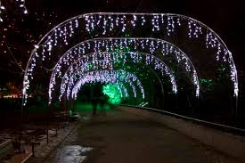 denver zoo lights hours denver zoo lights bonjour colorado